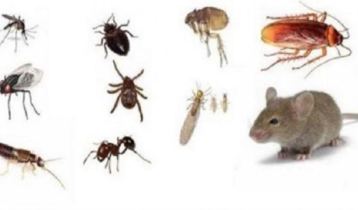 7 dicas simples para manter a casa livre de intrusos como ratos, baratas e formigas